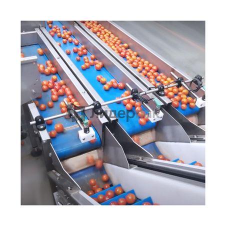 Автоматическая линия взвешивания и упаковки томатов черри #1